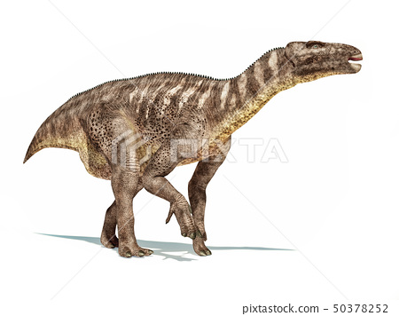 Iguanodon dinosaur isolated on white background. 50378252