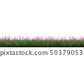 Strip of Wild Green Grass with many Purple flowers 50379053