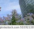 ดอกไม้สีฟ้าที่บานเต็มบานคือ Holi 50392138