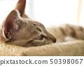 Relaxed Kitten 50398067