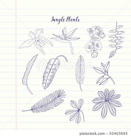 Jungle plants sketches. Hand Drawn Background 50403695