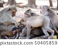 앙코르 유적 군 / 바 푸욘에있는 원숭이 50405859