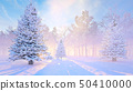 Winter,background,with,snowy,fir,tree,Morning 50410000