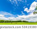 藍天和牧場馬 50419380