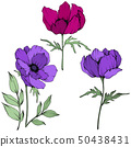 Vector Anemone floral botanical flowers. Black and white engraved ink art. Isolated anemone 50438431