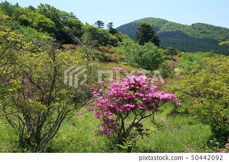 Unzen Takahara Azalea Garden GW 50442092