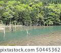 Aoi Miri Pond 50445362