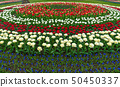 Spring fields of blooming tulip. Beauty outdoor 50450337
