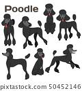 black poodle,dog in action,happy dog 50452146