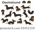 dachshund,dog in action,happy dog 50452150