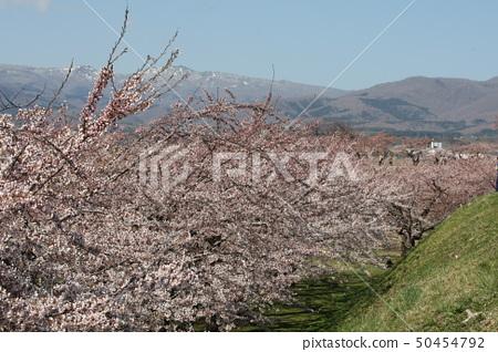 Sakura road 50454792