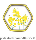 Rape Honey Concept. Brassica napus, rapeseed, colza, oil seed, canola and bees. Vector illustration 50459531