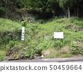 Takase's Kongomizu 50459664