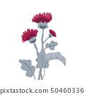 Thistle or burdock flowers. Cartoon thistle isolated on white, vector illustration 50460336