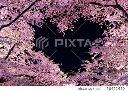 하트 벚꽃 50461430