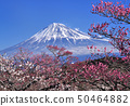 Plum and Mt. Fuji-2847 50464882