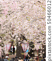 히로사키 벚꽃 축제 인파 풍경 50466012