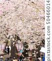 히로사키 벚꽃 축제 인파 풍경 50466014