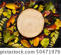 Autumn  leaves and berries on a dark  background 50471976