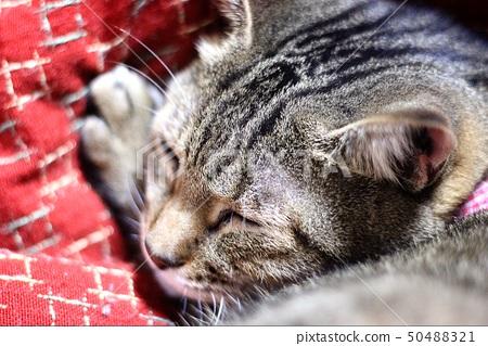 The kitten is in a dream 50488321