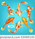 Different Colors Of Koi Exotic Fish Set Vector 50489145