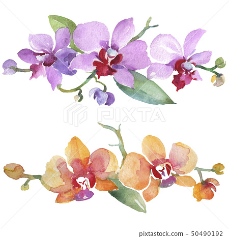 Orchid bouquets floral botanical flowers. Watercolor background illustration set. Isolated orchid 50490192