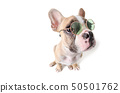 Cute french bulldog siting isolated on white 50501762