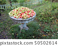 Green red apples lie on an old wooden table outdoor in the garden 50502614