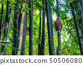 Green bamboo forest in a park in a natural 50506080