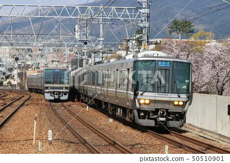벚꽃 피는 夙川을 달리는 223 계 신 쾌속 50510901