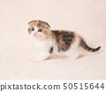 ลูกแมวหูแตก 50515644