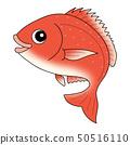 鯛紅鯛魚 50516110