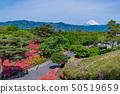 시즈오카 현 이토시 小室山 공원의 진달래 50519659