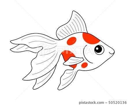 Goldfish Ryukin Goldfish Stock Illustration 50520136 Pixta