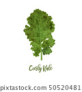 Curly kale. Food concept. Fresh juicy raw close up 50520481