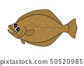 가자미 가자미 flounder 50520985