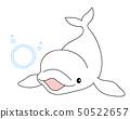 흰 고래 벨루가 버블 링 Beluga whitedolphin 50522657