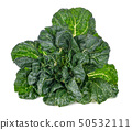 Bok choy vegetable isolated on the white 50532111