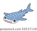 鯨鯊 50537138
