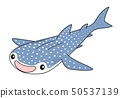 鯨鯊 50537139