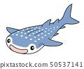 鯨鯊 50537141