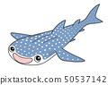 고래 상어 Whaleshark 50537142