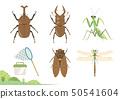 여름 곤충 그림 세트 / 딱정벌레, 사슴, 사마귀, 매미, 잠자리 50541604