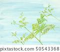 สีน้ำ Warabi 蕨 Warabi ผักป่าสีฟ้า 50543368