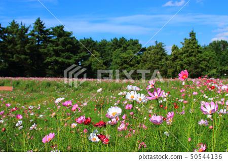 公墓,花, 50544136