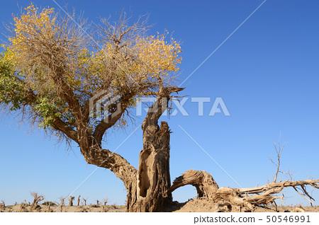 Dead tree 50546991