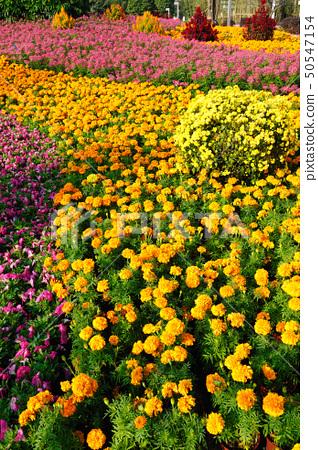Flowers in Garden 50547154