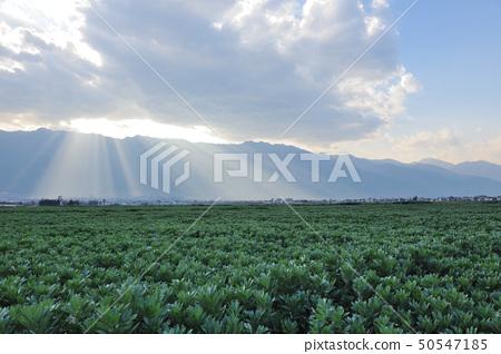 Field landscape 50547185