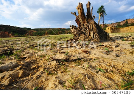Tree root on dried field 50547189