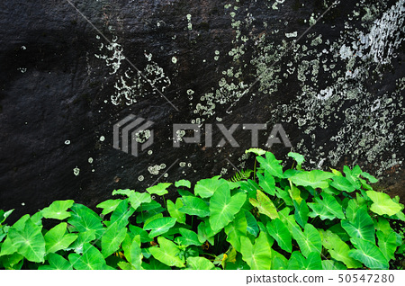 Stone wall with plants 50547280